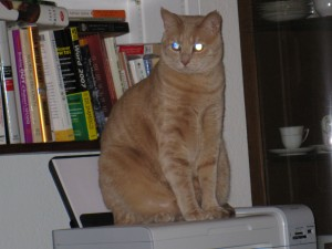 William with books and printer. By kathywaller1