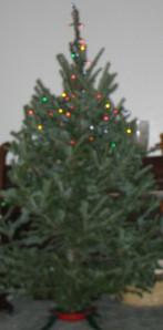 img_0506-e1261713651450-christmas-tree-top-lights