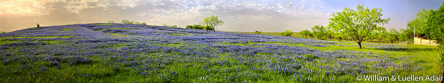 """Bluebonnet Sunrise"" licensed by Views of Life under CC BY-NC-SA-2.0. Via Flickr."