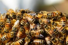 2018-07-24 ttm pixabay cc0 honey-bees-326334_640