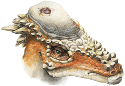 Restoration of a specimen with a cranial lesion. Ryan Steiskal / CC BY (https://creativecommons.org/licenses/by/2.5)