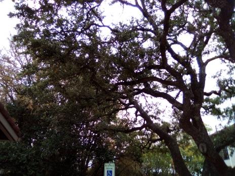 trees 00001IMG_00001_BURST1605032863781_COVER