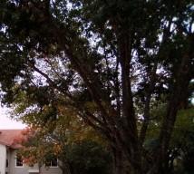 trees IMG_20201110_122648_8 (2)